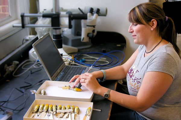 Allison Mistakidis uses a spectrophotometer to measure the plumage colour of a museum specimen of a warbler.