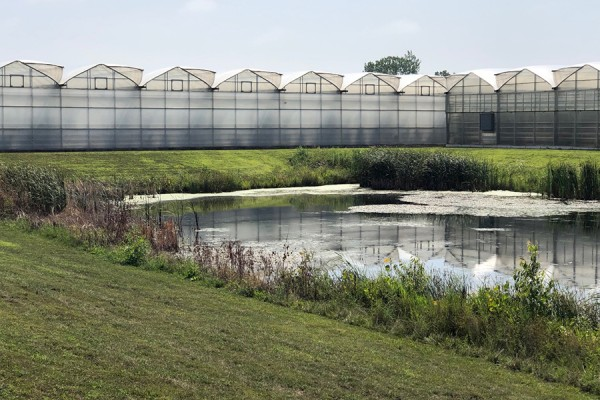 Stormwater retention pond outside a greenhouse
