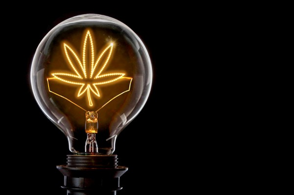 lightbulb with marijuana leaf filament