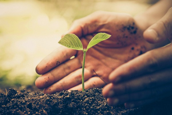 hands nurturing seedling