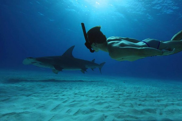 "scene of man swimming with shark from the documentary feature ""Sharkwater Extinction."""